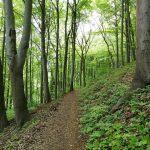 Weg durch einen lichten Laubwald